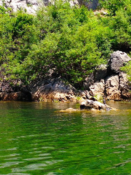 Скадарсоке озеро