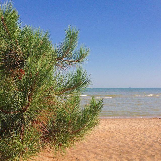Сосна на пляже
