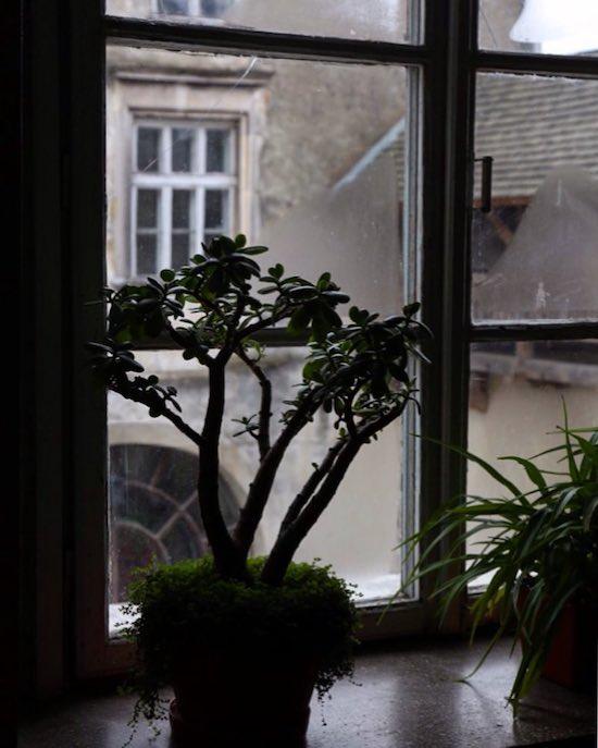 На окне