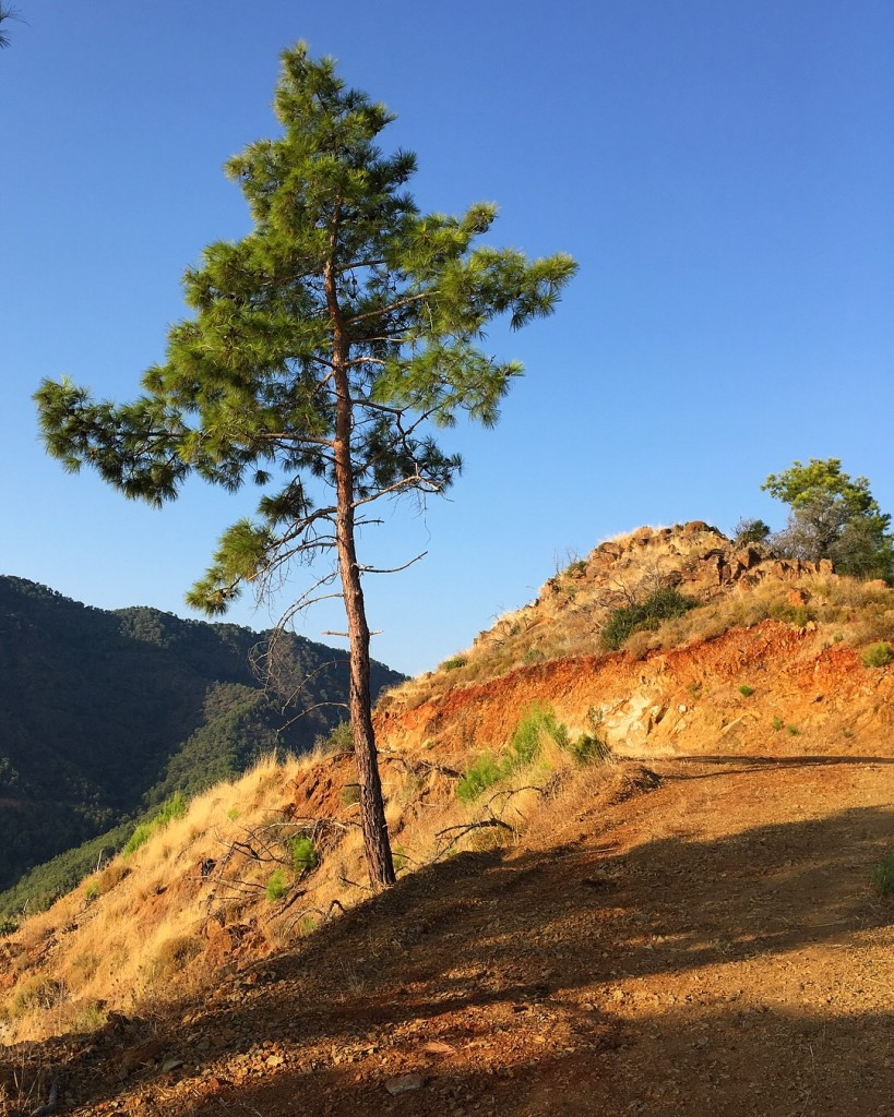Гора Бей